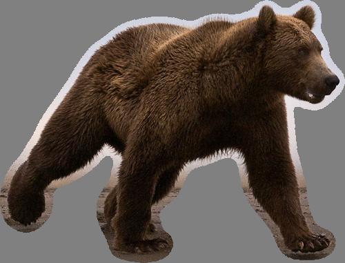 картинки для медведь на прозрачном фоне много