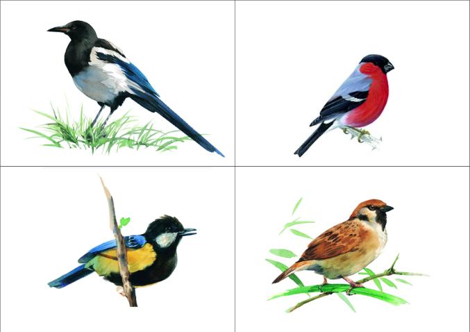 И распечатать картинки зимующие птицы, счастья всем