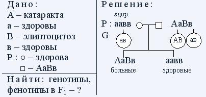 Генетика пола задачи решения комбинаторные задачи с решением 2 класс