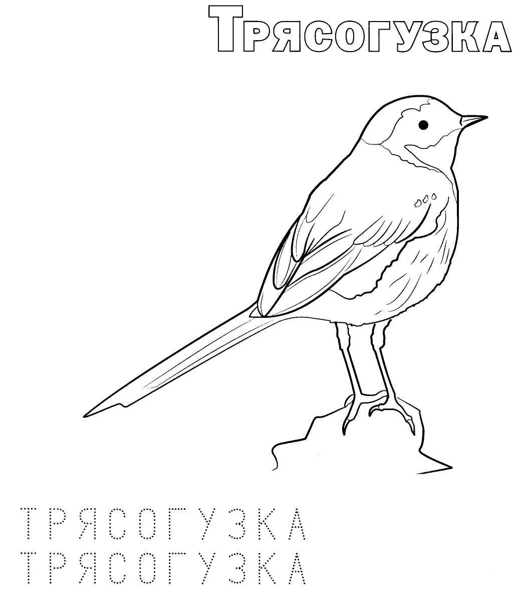 перелетные птицы печатать детей